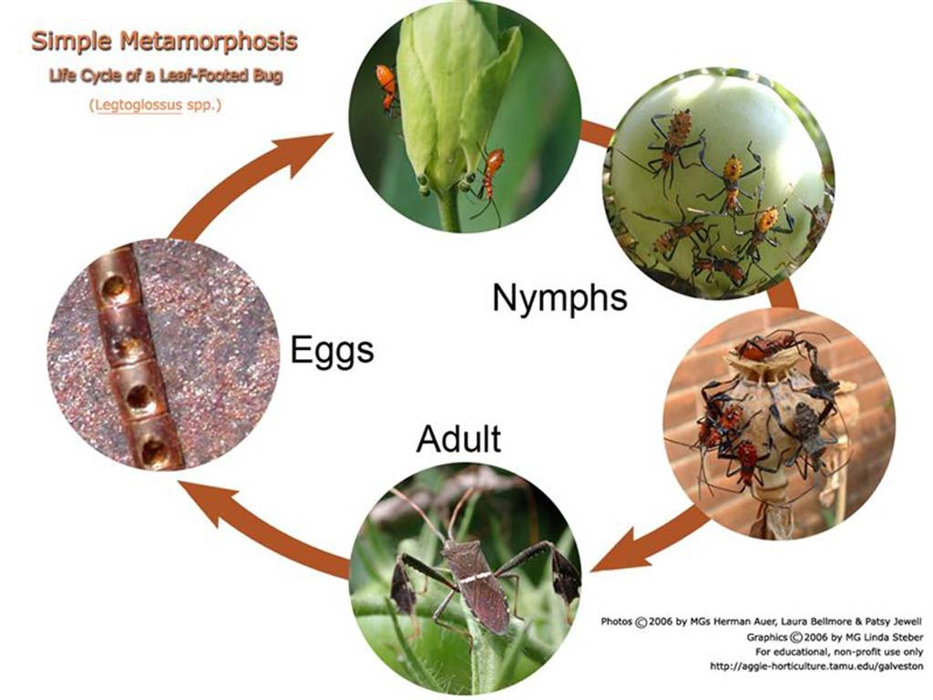 beneficials in the garden amp landscape types of insect